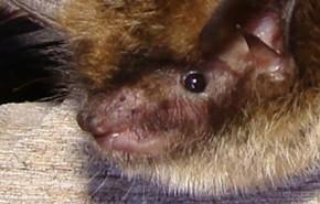 A Peek into the Nightlife of a Bat Biologist