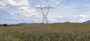 RTE Species and Cultural Resources Surveys for 500 kV Transmission Line Rebuild