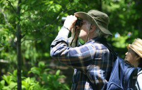 Bird Surveys, Powered by the People